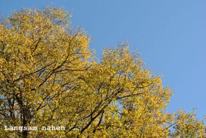 Gelbes Laub gegen blauen Himmel